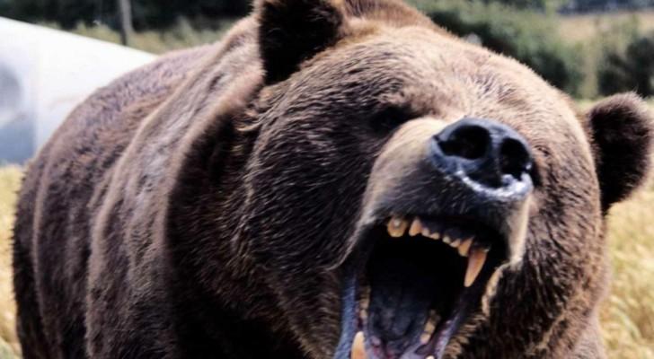 Зоозащита Уфы просит помочь в борьбе за медведя